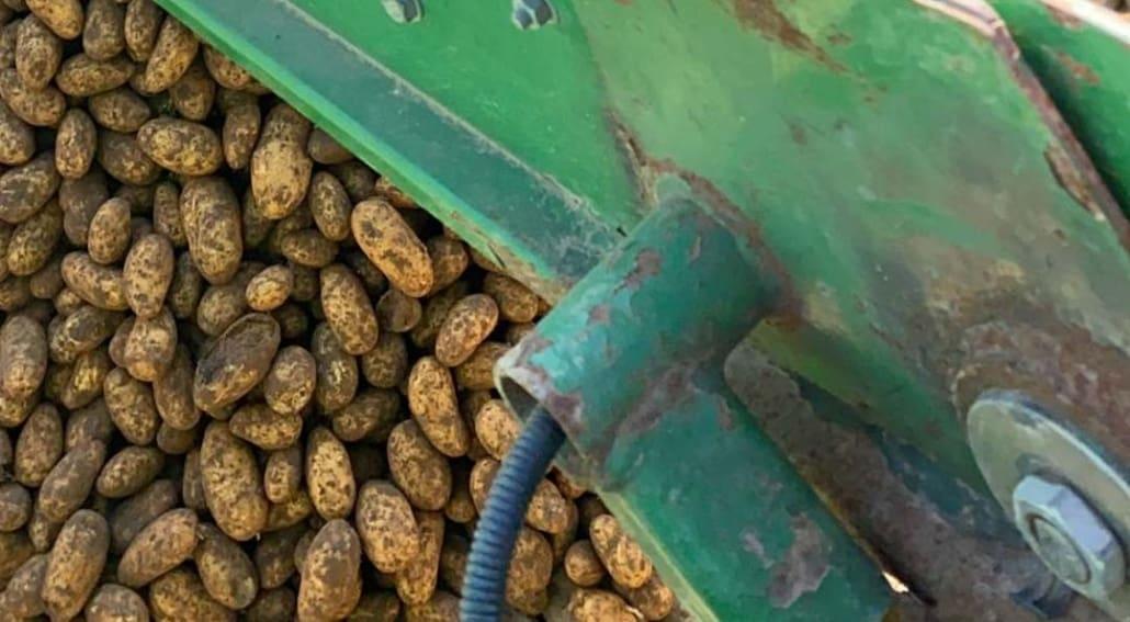 Kartoffeln Lindchen